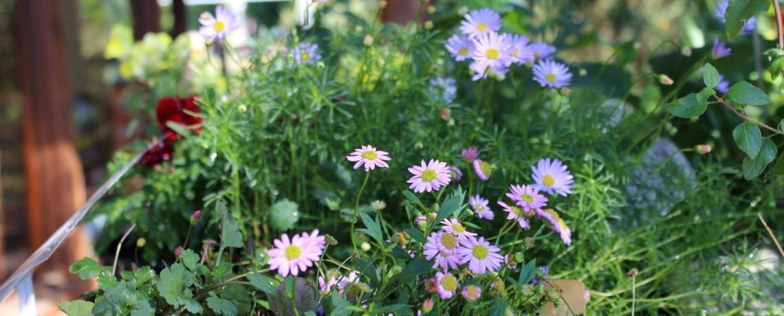 Australian Plants Nursery