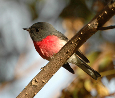 Woodland Birds Workshop