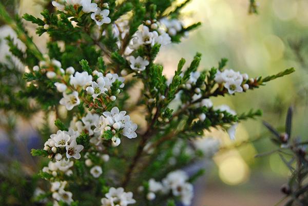 Horticulture Traineeship – Retail Nursery