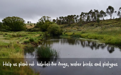 Habitat and Haven Community Planting Day