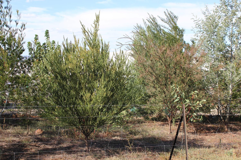 Native Trees Plantings